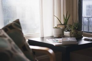 plants you need when moving into a new apartment